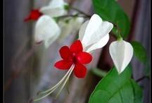 Flora / by Liza Maertens