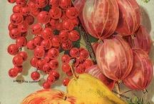 Fiori & Frutti / by Marimonte