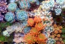 Succulents, Cacti, Bromeliads oh my / by Debbie Fox