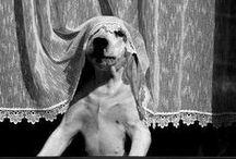Ahh los perros / Desde siempre con nosotros / by Amapola Lis