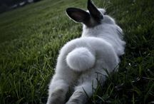 ANIMALS - FLUFFY BUTTS / LES DERRIÈRES; HUMANS TOO / by Teresita Calero