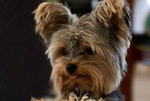 Precious Doggies!!! / by Mercy Rivera