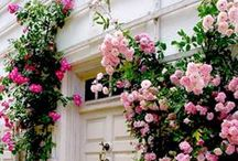 Garden Ideas / by Amy Plumb (Amelia Plumb Photography)
