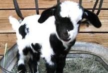 Farm Fur Babies / by Vicki Plath
