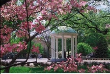 Hark The Sound / I'm a Tarheel born and a Tarheel bred and when I die, I'm a Tarheel dead.  / by Mary Carson Wells