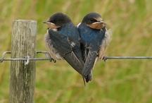 Birds, birdhouses and feeders to greet them / watch the birdie! / by Cheryl Kuhl-Schadt