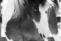 Caballos - Horses / by Sonvima