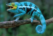 Reptiles/Amphibians, But Nooooo Snakes! / by Stacey DeSilva