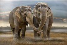 Elefante Admiration / Elephant admiration....that simple. / by Monica Isabel