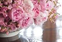 Pretty!!!!!! / by Sabrina Tantalo