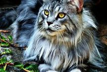 Powerful Animal Kingdom / by Monica Isabel