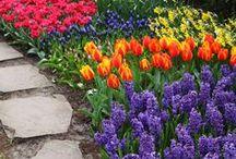 Springtime / Spring has finally SPRUNG! / by barkTHINS