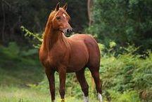 The Heavenly Horse - Sorrel & Chestnut / by Shari Rice
