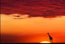 Africa / by Barbara