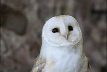 Owls, owls and more owls / by Kaye Weiss