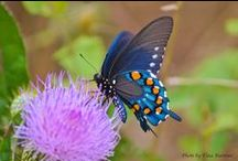 NATURE: Butterflies and Moths / Birds & Blooms editors share some of their favorite butterfly and moth items.  / by Birds & Blooms Magazine
