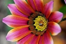 GARDEN: Amazing Flower Photos / Here at Birds & Blooms, we have high standards for garden and flower photos. See our faves!  / by Birds & Blooms Magazine