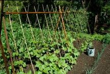 how does your garden grow? / by Lauren Farley