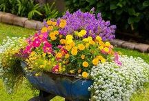 GARDEN: Clever Combinations / A flower on its own is lovely, but put it with some complementary cousins to really make your garden pop! Here are some of our favorite combinations for garden beds or containers. / by Birds & Blooms Magazine