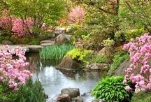 GARDEN: Dream Gardens / Backyard gardens are beautiful, but if you're looking to get out and visit some of the best Botanical Gardens in the country, we've got you covered! / by Birds & Blooms Magazine