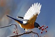 BIRDS: Amazing Photos Vol. 2 / Images of birds that leave us in awe. / by Birds & Blooms Magazine