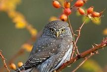 BIRDS: Birds of Prey / Stories and photos of these majestic birds. / by Birds & Blooms Magazine