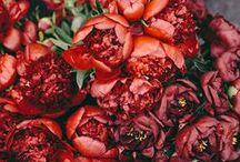 Floral / by Reagan Main