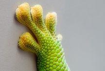 Reptiles / by Jackie Decker