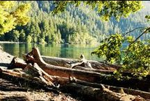 Beautiful Washington State and the Great Northwest. /  such a variety of choices / by Suzanne deCillia