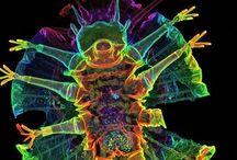 Tardigrades /  my spirit micro-animal / by Miriam Avery