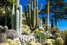 Cactus, Succulents & Sedums~~~~~~~ / by Charlotte Dierman