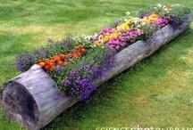 Garden Genius / by Faith Evans