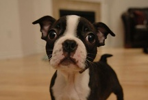Here Puppy Puppy  / All the cute puppies and dogs domestic and wild / by Sarah Welch