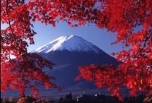 Japan / by Natalia Babilon