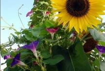 Gardening / by Krista