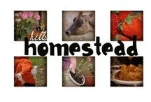 My Blog Entries...www.hillshomestead.com / by Hayley @ Hills Homestead!!