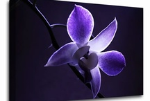 Floral Infusion Art / Quality floral wall art by Infusion. Unique canvas art prints from only £19.99. / by Infusion Art