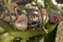 Birds / by Jackie Pedro