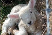 Sheep! / by miukat