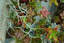 Succulents / by miukat