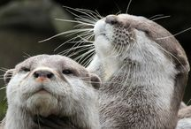 Ottery Wonderful / If we come back I intend to return as a river otter. I have one tattooed on my right ankle so when I step into my next life I'll step into my otter life. / by Joy Houp