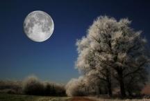 Moon / by mateus bier