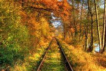 Autumn / Autumn, Halloween, & Thanksgiving / by Jessica Darnall