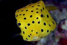Underwater World / #Underwater creatures #scuba #ocean #snorkel #reef / by Jessica Darnall