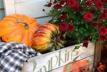 Autumn & Thanksgiving  / Cathy Erickson, The Stylish House. ~ Enjoying the fabulous ideas on Pinterest! / by The Stylish House