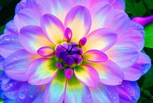 Floral / by Debra Pack Russeau