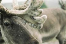 photography | wild kingdom / by Jill Petticrew