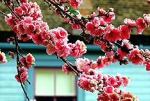 Spring Start / by Locanto
