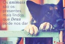 Dia dos Animais / Dia 14 de março é dia dos animais. Leais e companheiros, não importa o que aconteça. Animais são lindos, fofos e também merecem comemorar o seu dia! Confira. / by Mensagens com Amor