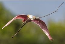 Bird's in Flight! - take off, soar, landing / by Anita Stroud